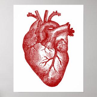 Vintage Herz-Anatomie Poster