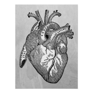 Vintage Herzanatomie Poster