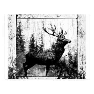 Vintage Hirsch-Rotwild-Schwarz-weißes Tier Postkarte