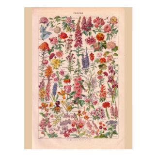 Vintage historische Blumen Postkarten