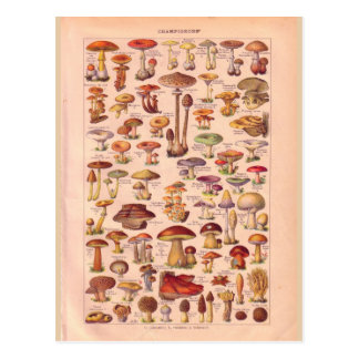 Vintage historische Pilze Postkarte