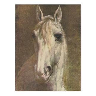Vintage Illustration 1907 des weißen Pferds Postkarte