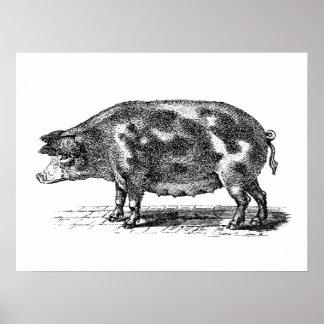 Vintage inländische Schwein-Illustration - Schwein Posterdruck