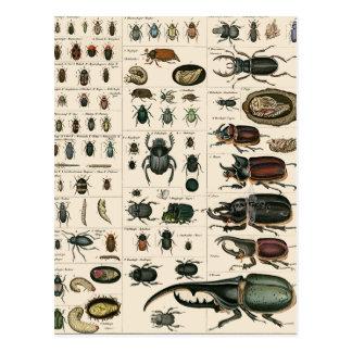 Vintage Käfer-Illustration Postkarten