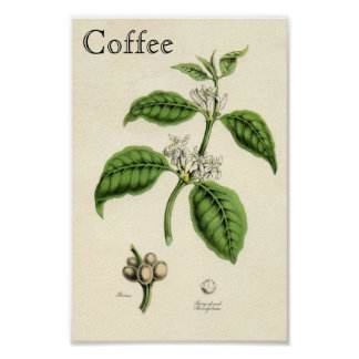 Vintage Kaffee-Pflanze Poster
