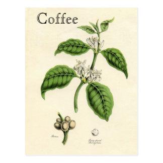 Vintage Kaffee-Pflanze Postkarte