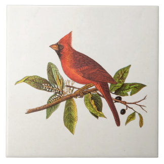 Vintage Kardinals-Lied-Vogel-Illustration - 1800's Große Quadratische Fliese