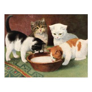 Vintage Katzen und Milch Postkarte