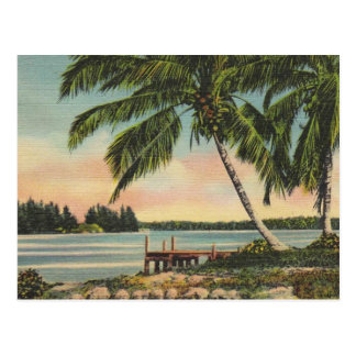 Vintage Kokosnusspalmen Postkarte