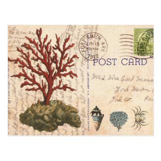 Vintage Korallen- und Seashellspostkarte Postkarte