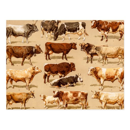 Vintage Kuh-Kalb-Stier-Milchkuh-Bauernhof-Illustra Postkarten