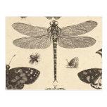 Vintage Kunst der Libellen-(Detail) Postkarte
