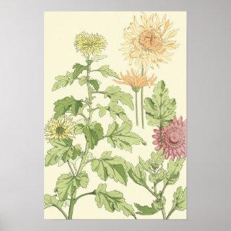 Vintage Kunst Nouveau, Chrysanthemen in einem Poster