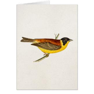 Vintage Lied-Vogel-Illustration - Vögel 1800 s Karten