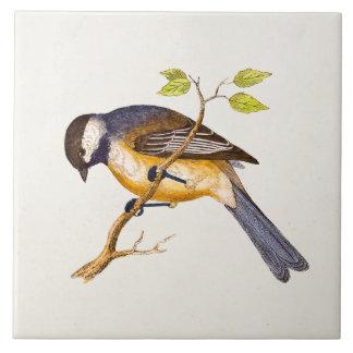Vintage Lied-Vogel-Illustration - Vögel 1800's Große Quadratische Fliese
