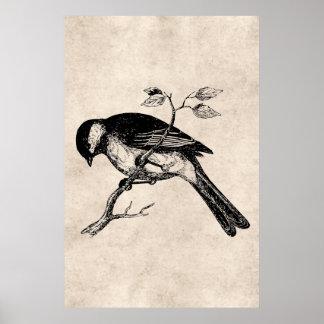 Vintage Lied-Vogel-Illustration - Vögel 1800's Poster