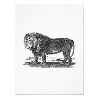 Vintage Löwe-Illustration - Tier des Fotografische Drucke