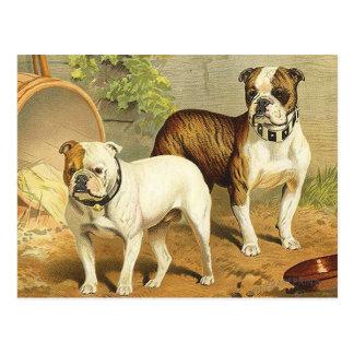 Vintage Malerei der englischen Bulldoggen Postkarte