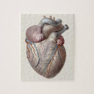 Vintage menschliche Anatomie-Herz-Organe gesund Puzzle