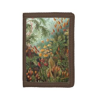 Vintage Moos-Pflanzen durch Ernst Haeckel,