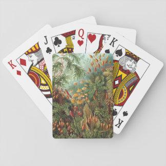 Vintage Moos-Pflanzen durch Ernst Haeckel, Spielkarten