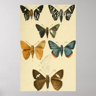 Vintage Motten-Illustrationen Poster
