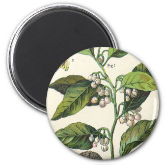Vintage Muskatnuts-Pflanzen-Frucht-Samen, Runder Magnet 5,1 Cm