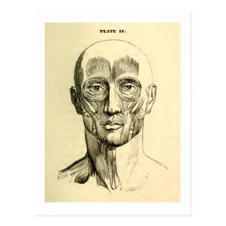 Vintage Muskeln der Anatomie-| des Gesichtes Postkarte