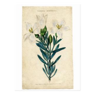 Vintage Osterlilie Postkarten