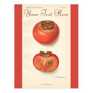 Vintage Persimone-Postkarte Postkarte