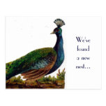 Vintage Pfau-Adressenänderung Postkarte