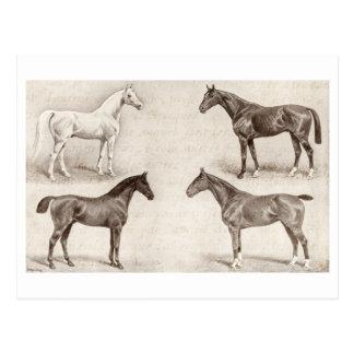 Vintage Pferde - Pferd und Pony-Vorlagenenpferd Postkarten