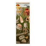Vintage Quallen-Antiken-Qualle-Illustration Visitenkarten