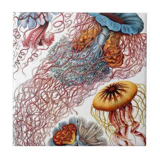 Vintage Quallen durch Ernst Haeckel, Discomedusae Kleine Quadratische Fliese