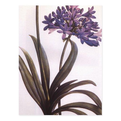 Vintage Redoute lila Blumen-Postkarte