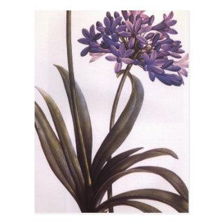 Vintage Redoute lila Blumen-Postkarte Postkarte