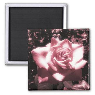 Vintage rosa Rose Quadratischer Magnet