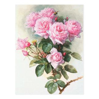 Vintage rosa Rosen, die Postkarte malen