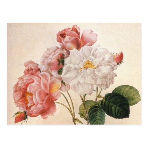 Vintage Rosen-Postkarte