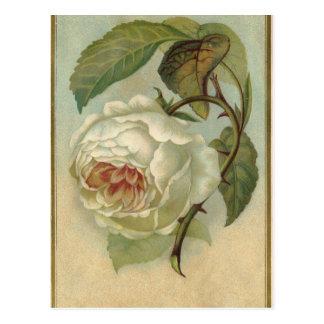 Vintage Rosen-Postkarte Postkarte