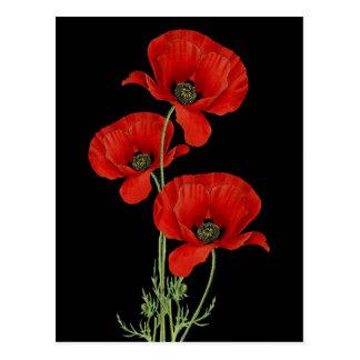 Vintage rote Mohnblumen botanisch Postkarte