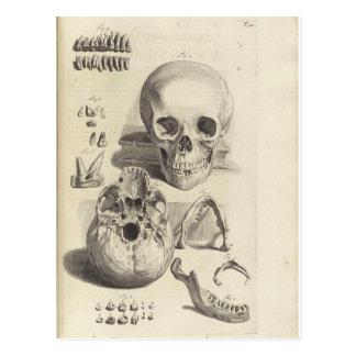 Vintage Schädel Postkarte