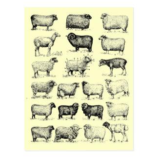 Vintage Schafe Postkarte