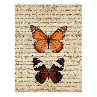 Vintage Schmetterlingssammlung Postkarten