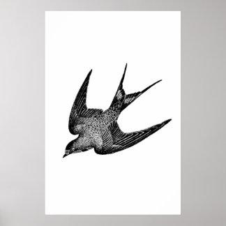 Vintage Schwalben-Illustration - antiker Vogel Poster