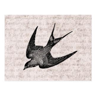 Vintage Schwalben-Illustration - antiker Vogel Postkarte