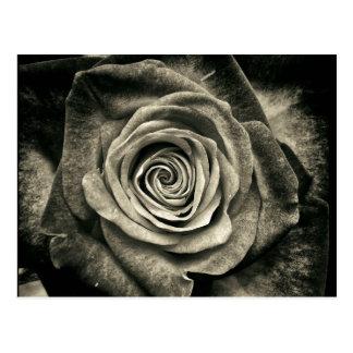 Vintage Schwarzweiss-Rose Postkarte
