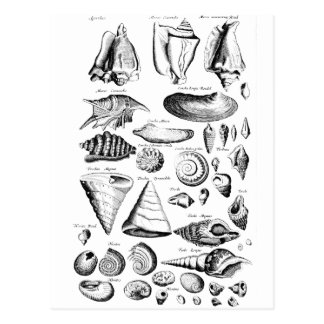 Vintage Seashells Postkarten