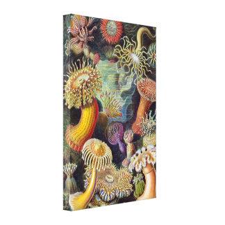 Vintage Seeanemonen, Actiniae durch Ernst Haeckel Leinwanddruck