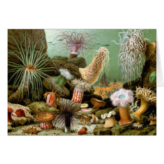 Vintage Seeanemonen, Marinelebens-Tiere Karte